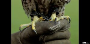 teambuildingmetroofvogels