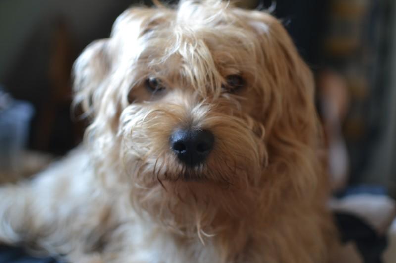 Onze vergaderhond officedog